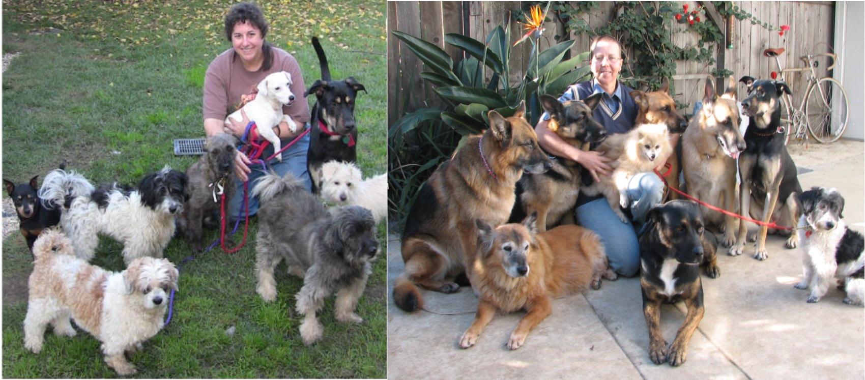 Chellaston Derby Dog Rescue